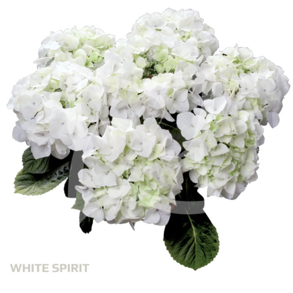 White Spirit (Bildquelle HBA)